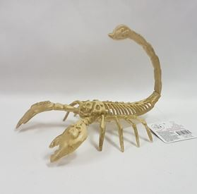 Skeleton scorpion